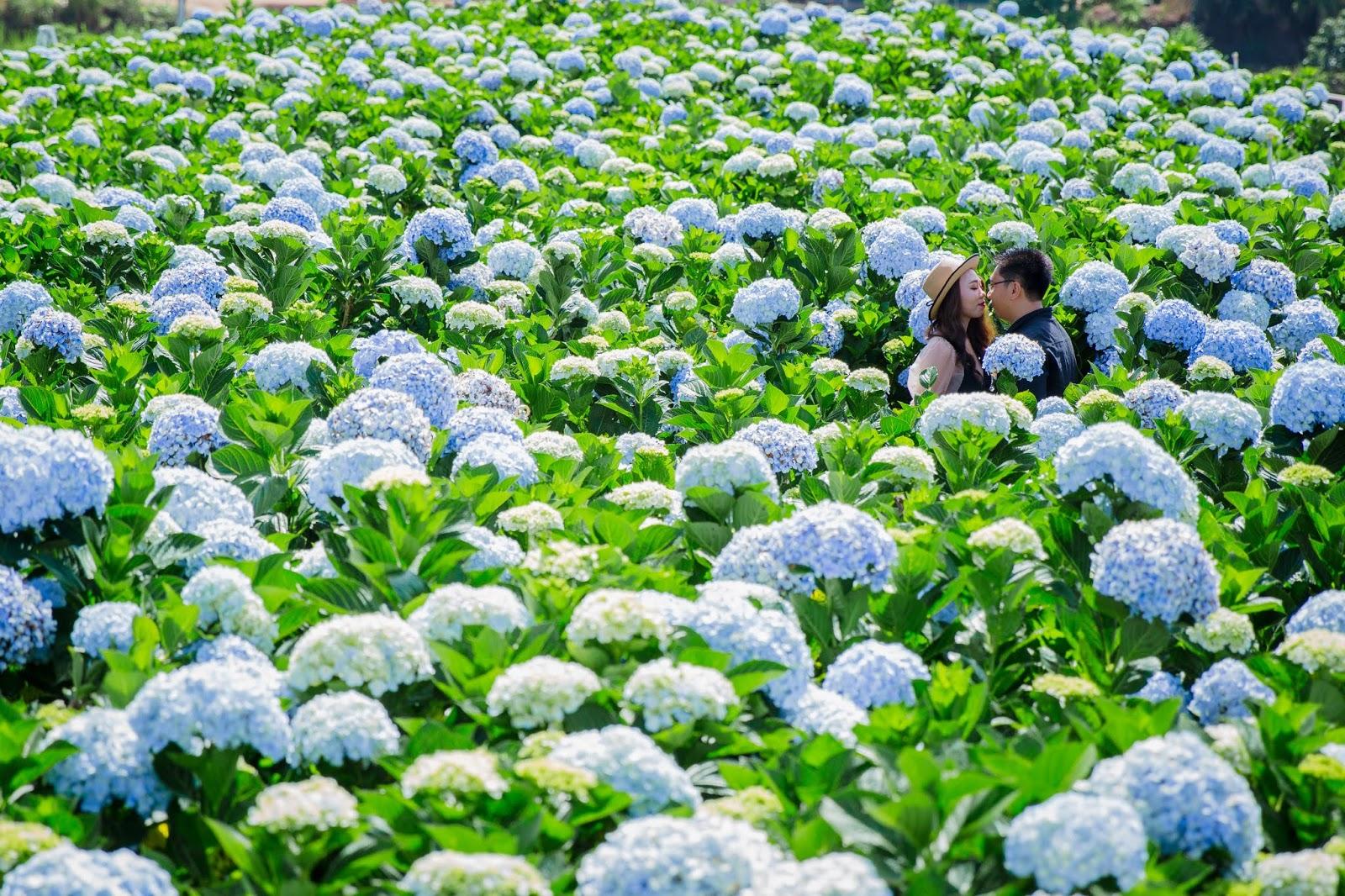Xếp hạng 8 studio chụp ảnh cưới đẹp nhất Bình Thuận -  Studio Áo Cưới An Khương